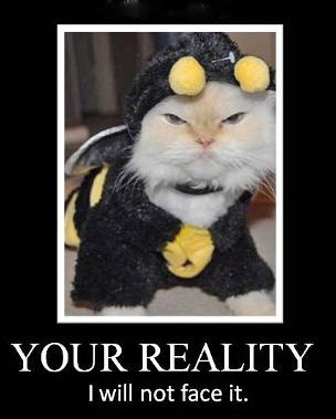 Bee-cat