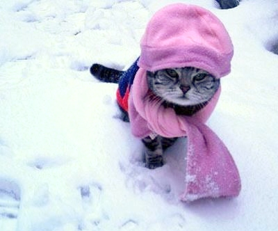 Coldcat